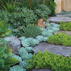 This may work for my garden path, transplant my Iciee blue sedium and Dragons blood sedium among the stepping stones.