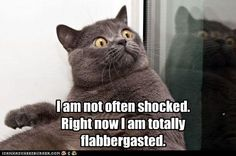 Cat totally flabbergasted