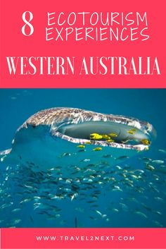 Personal Life: This website offers 8 ecotourism experiences in Western Australia. Australia Travel Guide, Visit Australia, Western Australia, Swimming With Whale Sharks, New Zealand Travel, Ultimate Travel, Travel Guides, Travel Tips, Family Travel