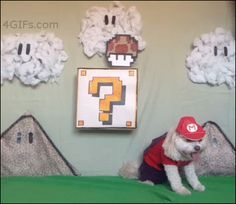This dog who portrayed the most flawless Mario. | The 47 Absolute Greatest Dog GIFs Of 2013