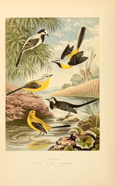 1894 - The smaller British birds : - Biodiversity Heritage Library