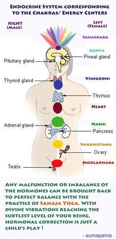 Endocrine system corresponding to Chakras. Sahaja Yoga Meditation, Kundalini Yoga, Yoga Spirituality, Chakra Root, Shri Mataji, Endocrine System, Lesson Quotes, Auras, Reflexology