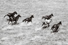 www.pegasebuzz.com | Equestrian Photographer : wild brumbies of Australia by Nick Leary