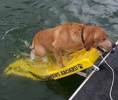 got a boat with a pup who likes to swim?  Also good for elderly people (Drunks)…