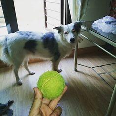 #dogslife 1