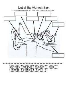 Label parts of the ear and sequence steps in hearing sound ...