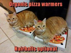 Want Pizza. Got the Box. - LOLcats is the best place to find and submit funny cat memes and other silly cat materials to share with the world. We find the funny cats that make you LOL so that you don't have to. Funny Cat Memes, Funny Cat Videos, Funny Cats, Funny Animals, I Love Cats, Crazy Cats, Cool Cats, Funny Animal Pictures, Funny Photos
