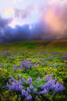 Springtime,The Dalles, Washington I've been here, gorgeous country.