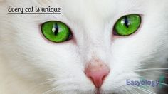 New #catowner Tip - Remember That Every Cat is Unique! @easyologypets