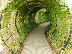tunnel into the poison garden at alnwick castle. yes, the poison garden, full of toxic plants and hallucinogens. I stayed at Alnwick castle during a college grad trip. Harry Potter learned to ride his broom in the keep. Landscape Architecture, Landscape Design, Garden Design, Chicken Tunnels, Poison Garden, Tree Tunnel, Poisonous Plants, Gardening, My Secret Garden