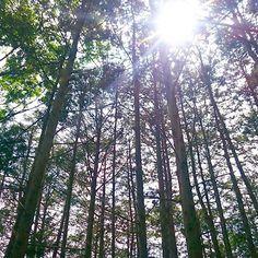【dsknkmr1118】さんのInstagramの写真をピンしています。《隙間から 。  #山 #登山 #太陽 #光  #森 #林 #木 #アウトドア  #mountain #climbing  #sun #light #outdoor  #woods #forest #tree》