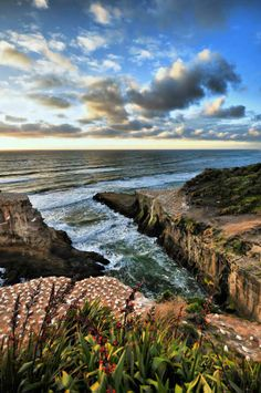 Muriwai Beach in Auckland, New Zealand. Start planning your trip on www.carryon.com