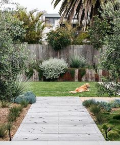 Cottage Garden Landscaping The new look Aussie backyard - Native Plant Project.Cottage Garden Landscaping The new look Aussie backyard - Native Plant Project Australian Garden Design, Australian Native Garden, Backyard Garden Design, Backyard Landscaping, Landscaping Ideas, Backyard Ideas, Backyard Projects, Southern Landscaping, Small Garden Landscape Design