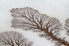 """Rivers form tree-like shapes in the desert in Baja California, Mexico. This image has a wonderful texture that is almost surreal. At first glance, it's hard to even distinguish what the subject of this photo is—is it snow? Some kind of microscopic leaf or moss? It's just downright stunning as a desert aerial."""" —Janna Dotschkal, assistant photo editor. (via National Geographic)"""