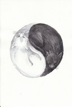 Pienso que es: Gato negro Gato blanco, pero es de Cathat.tumblr.com