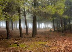 Forest in Gran Canaria
