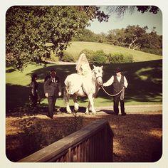 "@Temecula Creek Inn Handcrafted Weddings's photo: ""Arriving in style! Congratulations Mr.  Mrs. Thompson! #ksthompsonwedding #stonehouseweddings"""