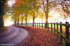 Autumn Road - Day 311/365 by Rosanna Bell, via Flickr