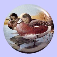American Waterbirds: American Wigeon - Hamilton Collection - Artist: Rod Lawrence