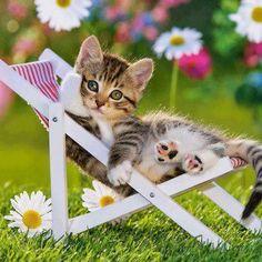 Funny cat ! #animals #cat
