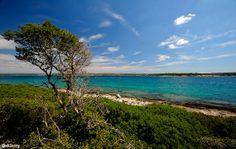 Isles of wonder: The group of 14 small Brijuni Islands is now a National Park and perfect for visits by boat