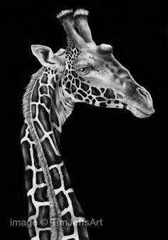 Tim Jeffs Art: Ink Drawings