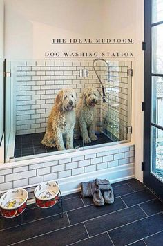 dog washing station in laundry room \ dog washing station in laundry room ; dog washing station in laundry room diy ; dog washing station in laundry room pets Dog Washing Station, Dog Station, Cat Feeding Station, Laundry Station, Dog Rooms, Rooms For Dogs, Dog Shower, Shower Floor, Bath Shower