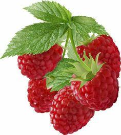 Fruit Illustration, Food Illustrations, Botanical Illustration, Watercolor Fruit, Fruit Painting, Botanical Drawings, Botanical Art, Image Fruit, Anna Mason