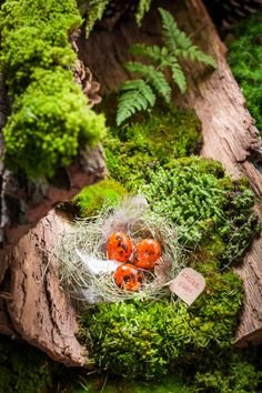fresh easter eggs on bark with moss