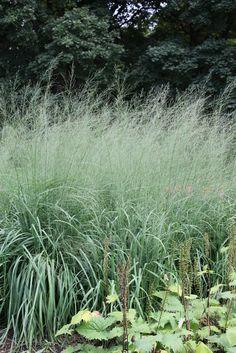 Molinia cerulea subsp. arundinacea 'Transparent' - Purple Moor Grass Prairie Planting, Prairie Garden, Meadow Garden, Urban Landscape, Landscape Design, Plant Design, Garden Design, Plants For Raised Beds, Splendour In The Grass