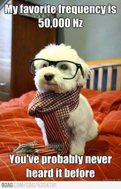 Hipster dog. Audiology humor @Christie Macey this is chelsea right?