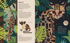 Crazy about Cats - Owen Davey Illustration