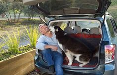 Cesar's best dog travel tips | Cesar's Way Bringing your dog on vacation with you just adds to the fun and alleviates the worry of not knowing what's happening with your dog while you're on the road. You need to do your homework on dog travel though.