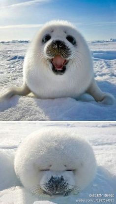 Image result for What animals are in the South Pole