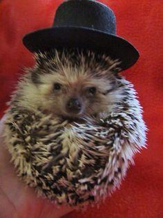 Hedgehogs are soooo cute!!!!