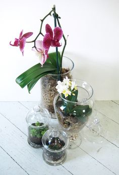 Making orchid terrariums in glass jars is a lovely way to display these beautiful plants in an easy to move and care for way.