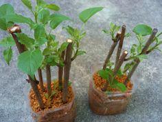 Green Flowers, Flowers, Garden, Kitchen Garden, Green, Propagating Plants, Outdoor, Flower Arrangements, Plants