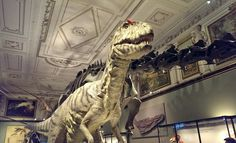 Naturhistorisches Museum in Wien - Nachbau eines Tyrannosaurus Rex.