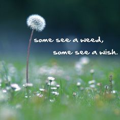 Some see a weed, some see a wish. #quote #missmejeans