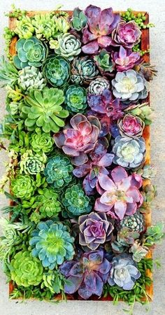 Love succulents and the colors. Think I may have finally found a wedding color scheme!