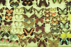 Butterflies ❤️