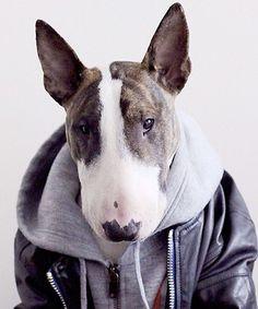 dujour.com/gallery/instagram-cutest-pets-fashion/