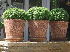 βασιλικος Basil, Landscape Design, Planter Pots, Outdoor, Greece, Balcony, Garden Ideas, Sweet, Outdoors
