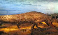 Saurosuchuus