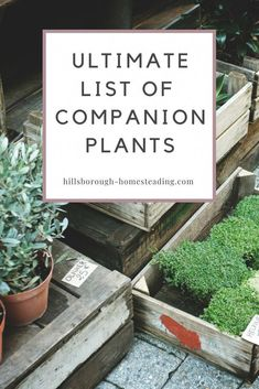 Organic Gardening Supplies Needed For Newbies Intimidated By Companion Planting? This Long List Of Companion Plants Explains Exactly What They Are And How To Use Them To Get The Most Out Of Your Garden This Year Hillsborough Homesteading Growing Tomatoes In Containers, Growing Vegetables, Gardening Vegetables, Hydroponic Gardening, Container Gardening, Permaculture Garden, Greenhouse Gardening, Hydroponics, Table Color