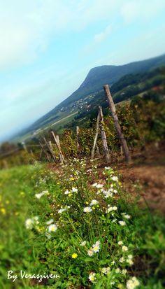 Balaton felvidék Hidden Beauty, Central Europe, Slovenia, Hungary, Romania, Landscapes, Garden, Flowers, Photos