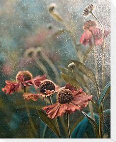 Summer Rain - Helenium in my garden by Magdalena Wasiczek
