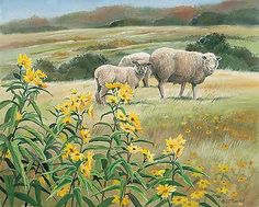 Fields of Yellow-Sheep by Susan Bourdet
