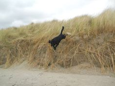 Dog walks: Bull Island Dog jumping from the dunes The Dunes, Dog Paws, Dog Walking, Walks, Your Dog, Island, Dogs, Animals, Animales