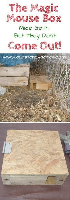 The Magical Mouse Box is a simple solution we have been using for years to help control the mice population around our chicken coop and compost bins. Build a few of these and your mice problem will magically disappear!